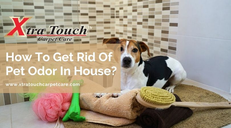 How To Get Rid Of Pet Odor In House