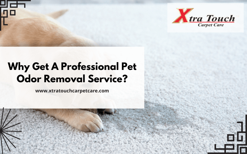 Why Get A Professional Pet Odor Removal Service?