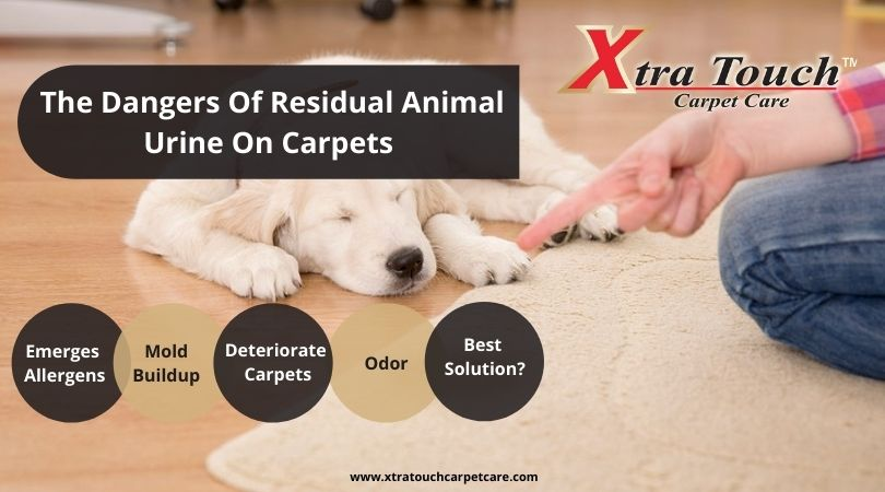 The Dangers Of Residual Animal Urine On Carpets