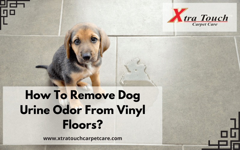 How To Remove Dog Urine Odor From Vinyl Floors?