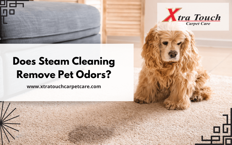 Does Steam Cleaning Remove Pet Odors