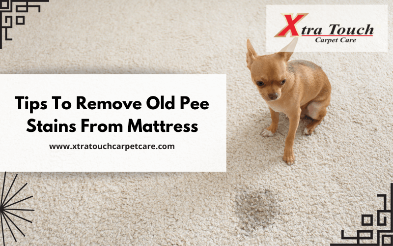 Tips To Remove Old Pee Stains From Mattress